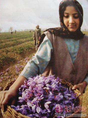 伊朗的红花妹
