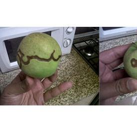 奇迹苹果现迪拜