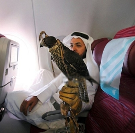 falcon flight