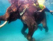 hamdan diving