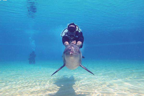 Dolphins_编辑