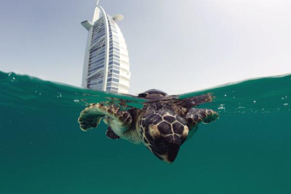 Turtles_编辑