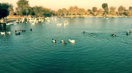 迪拜4个最好看的湖193