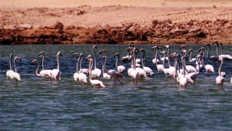 迪拜4个最好看的湖273