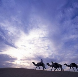 nEO_IMG_nEO_IMG_lux3081ls-95807-Camel ride